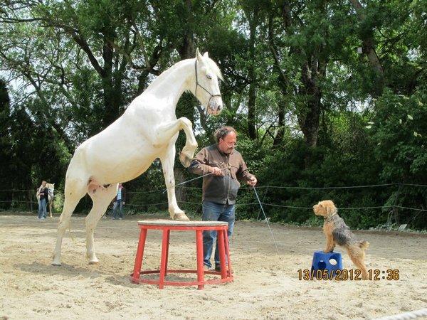 centre equestre quillan
